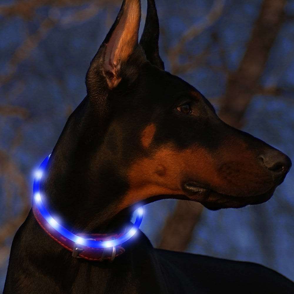 BSEEN Led Dog Collar USB Rechargeable Glowing