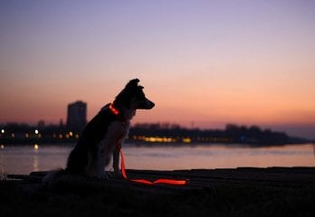 Best LED Dog Collars In 2019
