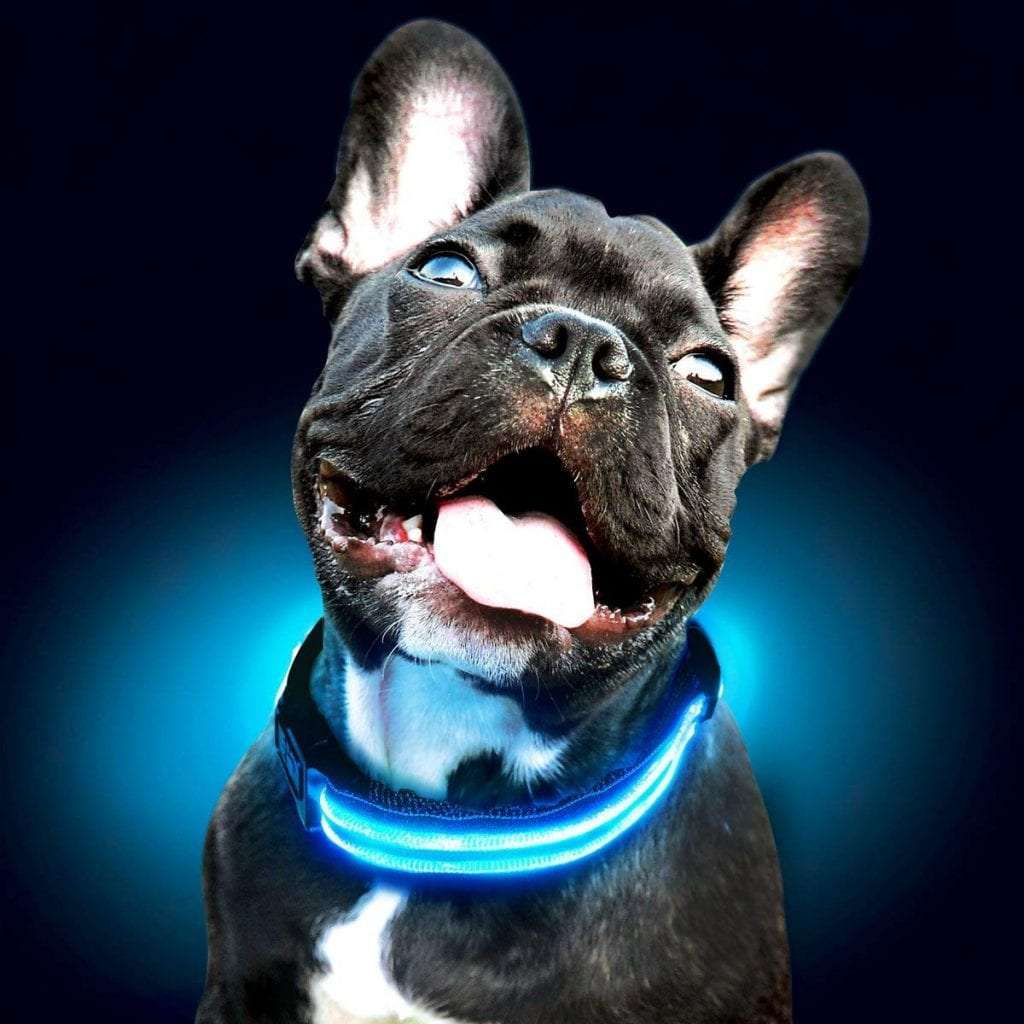 Shine For The Dogs Ultimate Dog Collar