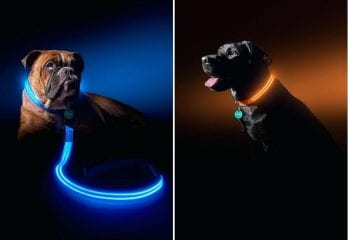 Best LED Dog Collars in 2020