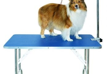 Top 10 Best Dog Grooming Tables in 2020